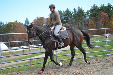Re-training OTTB Eric's Flame at Turning Leaf Horses in Grafton MA 508 481-1550